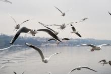 Möwen über dem Bodensee