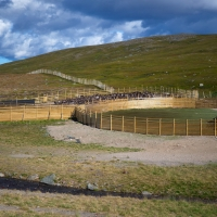 Rentierscheidung am Ifjordfjellet