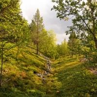 Im Stabbursdalen Nationalpark