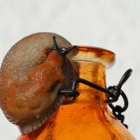 Schnecke aus der Flasche